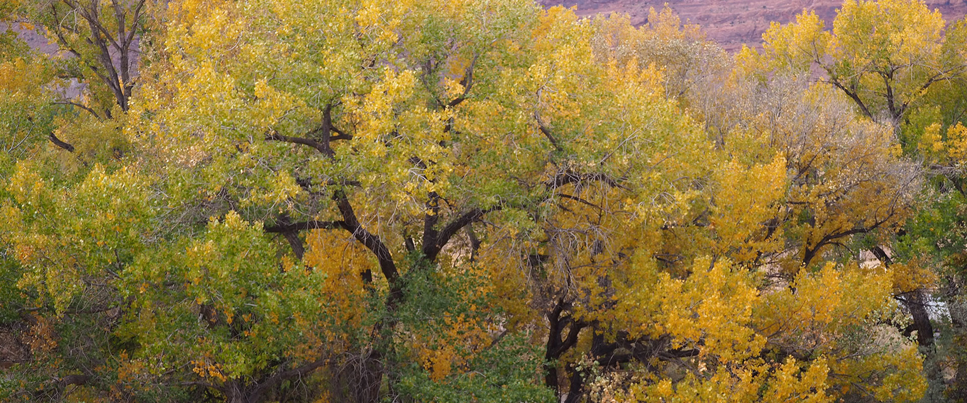 The public park space at Moab Springs Ranch provides guests with a shallow wading pool, hammocks, picnic table, and a cooking area with a barbecue grill, chairs and table.